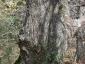 castagno-secolare-adrano-ct-06