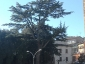 _cedro-dell-Himalaya-Vallerano-vt-17