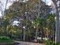 ficus-macrophylla-giardino-bellini-catania-02