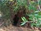 una tana nel tronco