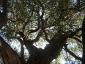 particolare di un ramo