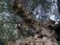 l'Olivo della Strega a Magliano in Toscana (Gr)-14