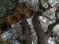 l'Olivo della Strega a Magliano in Toscana (Gr)-16