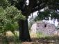 Quercia-Vallonea-tricase-08