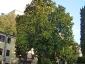 magnolia-della-contessa-polcenigo-pn-01
