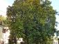 magnolia-della-contessa-polcenigo-pn-02