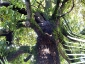 magnolia-della-contessa-polcenigo-pn-07