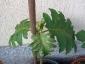 L\'altra piante vista dall\'alto