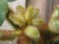 Crescita dei fiori