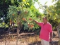 giuseppe-marino-albero-melanzane-e-pomodoro-4.jpg