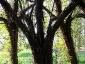 weidenrutenpalast - Auerworld 4