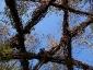 weidenrutenpalast - Auerworld 5