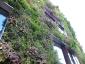 Il giardino verticale del Musée du quai Branly 20