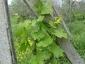 foglie colorate dopo primo trattamento