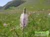 florablog-castelluccio-01.jpg