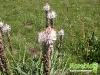 florablog-castelluccio-03.jpg