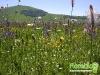 florablog-castelluccio-10.jpg