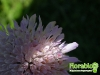 florablog-castelluccio-11.jpg