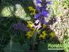 florablog-castelluccio-13.jpg