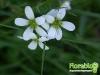 florablog-castelluccio-33.jpg