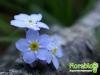 florablog-castelluccio-34.jpg