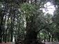 foresta-primaria-di-montes-02