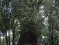 foresta-primaria-di-montes-03