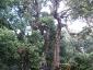 foresta-primaria-di-montes-04