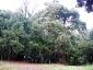foresta-primaria-di-montes-05