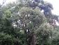 foresta-primaria-di-montes-06