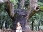 foresta-primaria-di-montes-07