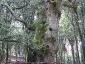 foresta-primaria-di-montes-08