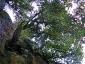 foresta-primaria-di-montes-11