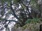 foresta-primaria-di-montes-12
