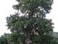 foresta-primaria-di-montes-14
