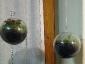 giardino-nella-palla-01-g