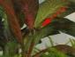 giardino-nella-palla-03-g