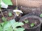 04-zucchine.jpg