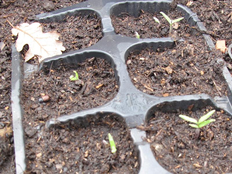 Marzo l 39 orto e il semenzaio florablog for Semina cipolle