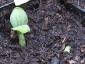05-zucchine.jpg