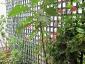 Albero delle melanzane: innesto erbaceo per approssimazione della melanzana sul Solanum torvum-03