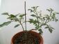 foto-6-fiorisce-anche-la-melanzana-14-giugno