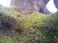 quercia-delle-streghe-capannori-06