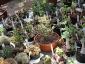 06-murabilia-09-succulente