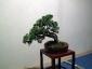 17-murabilia-09-bonsai