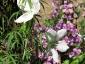 27-murabilia-09-fiori