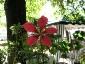 28-murabilia-09-fiori