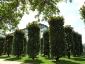 parc-ancre-citroen-08
