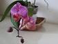 phalaenopsis-keiki-fiore-04