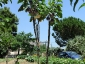 albero-melanzane-03